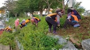 함평군 엄다면, 지역사회단체와 환경정화활동 실시